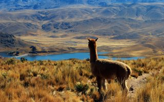Tour of Peru, Bolivia and Chile