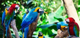 Holidays to Peru's Amazon rainforest