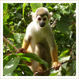 Ecuador Amazon rainforest holidays