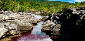 Travel to Caño Cristales