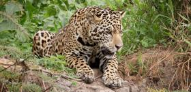 Photos of Pantanal